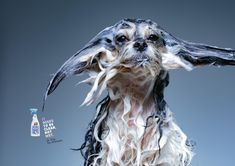 Print advertisement created by Propeg, Brazil for Dr. Dog, within the category: Pets. Dog Treat Packaging, Ad Of The World, Seal Pup, Japanese Cat, Behance, Dog Shampoo, Advertising Photography, Ad Design, Branding Design