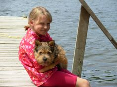 Frequently Asked Questions Norfolk Terrier Puppies, Norwich Terrier, Hip Dysplasia, Toilet Training, Pet Puppy, Terriers, Pets, Terrier, Animals And Pets