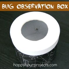 Kids' Bug Observation Box and Giveaway for One Year of Orkin Pest Control FREE! #EEKologist #ad #giveaway
