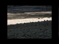 Sunset, Boats, Birds, Beethoven - Neshaminy State Park, Bensalem, PA