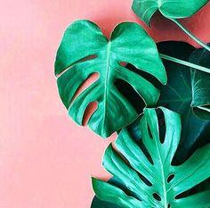 Resultado de imagen para palm leaves on pink background