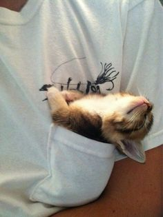 What came first, the kitty, or the kitty-sized pocket?