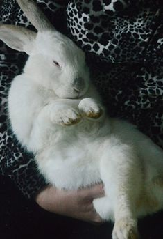 Ronnie the Runaway Rabbit Escapes Factory Farm Hell