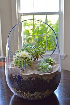 Don't have a green thumb? Decorate your home with something that's super low-maintenance like this succulents terrarium! Decor Terrarium, Cactus Terrarium, Terrarium Wedding, Glass Terrarium, Cacti And Succulents, Planting Succulents, Planting Flowers, Suculentas Diy, Cactus Y Suculentas