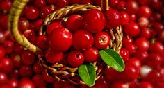Dr. Oz's 10 Favorite Superfoods Lingonberries--With 30% more antioxidant power than blueberries, not only do these Scandinavian berries help fight cancer and diabetes, they're a natural antibiotic – and they can prevent bad cholesterol from damaging your arteries, which help avoid heart attacks and stroke.