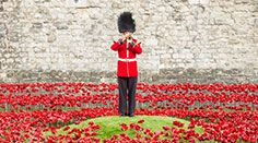 Tower of London Remembers--Every evening during the installation, the Last Post was played at sunset. Members of the Commonwealth forces who were killed in the First World War were nominated to have their name read out in this nightly ceremony.