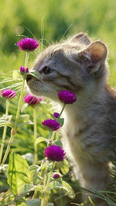 Funny Videos Of Cute Baby Animals, Cute Adorable Kittens For Sale underneath Cute Animals Dancing like Cutest Kittens To Buy past Cute Animals Short Videos Cute Kittens, Cats And Kittens, Fluffy Kittens, Cats Bus, Tabby Cats, Animals And Pets, Baby Animals, Funny Animals, Cute Animals