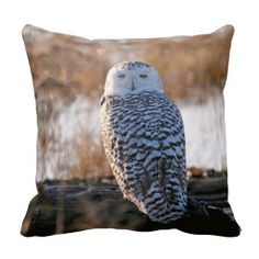 >>>Smart Deals for          	Snowy Owl Winking Throw Pillows           	Snowy Owl Winking Throw Pillows We have the best promotion for you and if you are interested in the related item or need more information reviews from the x customer who are own of them before please follow the link to see f...Cleck Hot Deals >>> http://www.zazzle.com/snowy_owl_winking_throw_pillows-189071521235231984?rf=238627982471231924&zbar=1&tc=terrest