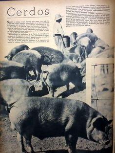 Fuente: Revista M.A.N. 1940 (mar/abr)