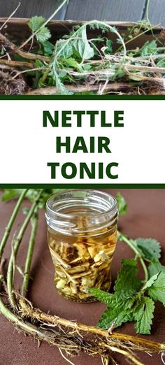 Made of nettle roots this potent stinging nettle extract possesses many medicinal benefits that might help to stimulate hair growth or increase the flow rate and urinary volume in men. Organic Hair Care, Natural Skin Care, Hair Tonic, Natural Remedies, Hair Growth, Roots, Natural Parenting, Grow Hair, Natural Living