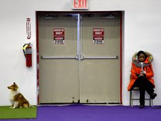 A dog waits to run the agility course during the 3rd annual Masters Agility Championship in New York at the 140th annual Westminster Kennel Club Dog Show.  Timothy A. Clary, AFP/Getty Images