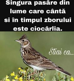 Romania, Did You Know, Facts, Bird, Awesome, Culture, Be Awesome, Birds, Truths