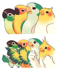 Bird Drawings, Cute Drawings, Animal Drawings, Funny Birds, Cute Birds, Animals And Pets, Baby Animals, Cute Animals, Parrot Drawing