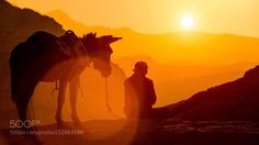 Lonely man with his donkey by info5298  sunset travel man desert jordan donkey info5298