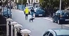 Street Dog Saves Woman From Being Robbed