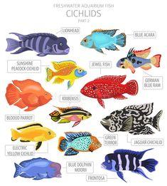 Tropical Freshwater Fish, Freshwater Aquarium Fish, Tropical Fish, Marine Aquarium Fish, Cichlid Fish, Fish Icon, Cool Fish, Fish Illustration, Fish Drawings