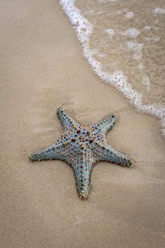 Starfish on the Beach Wallpaper Aesthetic, Cottages By The Sea, Ocean Creatures, Sea World, Ocean Beach, Summer Beach, Ocean Life, Marine Life, Under The Sea
