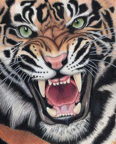 Angry Sumatran by Sherry Goeben - District Artisan Angry Tiger, Pet Tiger, Tiger Face, Tiger Head, Bengal Tiger, Tattoo Wallpaper, Tiger Wallpaper, Tiger Sketch, Tiger Drawing