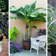25 creative backyard ideas for small yards 00020 Indoor Fruit Trees, Potted Trees, Indoor Plants, Garden Soil, Garden Plants, Balcony Garden, Garden Web, Porch Plants, Garden Edging