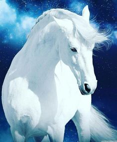 A beautiful horse to brighten your day! (not my photo) Cheryl EECustomHorseS - Schöne pferde - Most Beautiful Horses, Pretty Horses, Horse Love, Horses And Dogs, Animals And Pets, Cute Animals, Horse Photos, Horse Pictures, Beautiful Creatures