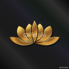 Luxury Gold Lotus plant image.