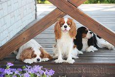Dogs, Animals, Animales, Animaux, Pet Dogs, Doggies, Animal, Animais