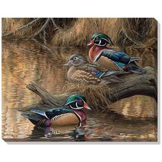 This wrapped canvas features original art of two drake wood ducks and a hen. This breathtaking canvas arrives ready to hang unframed, and offers a clean, contemporary feel focusing solely on the image