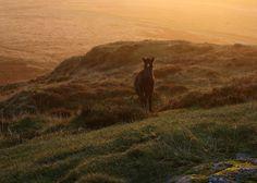 Dawn Foal (by Argentem)