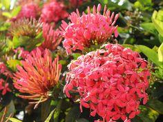 Flowers of Maui, Hawaii. #flowers