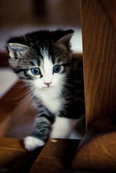 Moustache on http://www.yummypets.com/ #kitty #kitten #chaton #cute