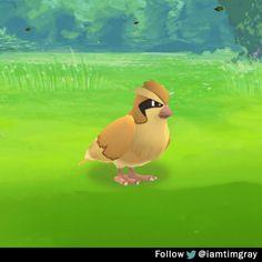 Since PokemonGo updated I updated my GIF
