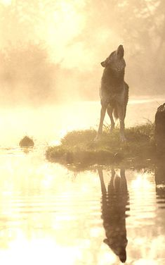 Wolf in Fog | Flickr - Photo Sharing!