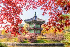 Popular on : Gyeongbukgung and Maple tree in autumn in korea. by praewa_koreashopping Autumn In Korea, Red Maple Tree, I Love The World, South Korea Travel, New Travel, How Beautiful, Travel Accessories, Big Ben, Singapore