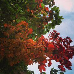 cladelcroix:  Les arbres se parent des couleurs de l'automne ...