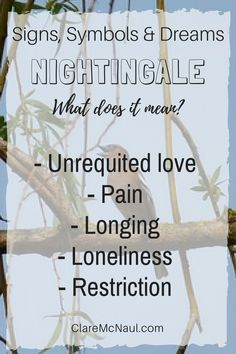 What does it mean when Nightingale presents in your psychic and mediumship readings or your dreams? Psychology Meaning, Dream Psychology, Spirit Animal Totem, Animal Totems, Facts About Dreams, Dream Symbols, What Dreams May Come, Free Tarot Reading, Sign Meaning