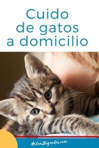 Cuido de Gatos a Domicilio en Costa Rica Costa Rica, Blog, Animals, Gatos, Animales, Animaux, Blogging, Animal, Animais