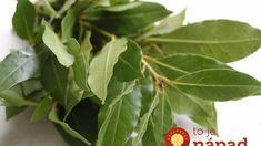 Túto rastlinu má doma takmer každý. Ľudia však netušia, čo všetko dokáže! Nordic Interior, Healing Herbs, Health Advice, Korn, Detox, Diy And Crafts, Plant Leaves, Gardening, Healthy