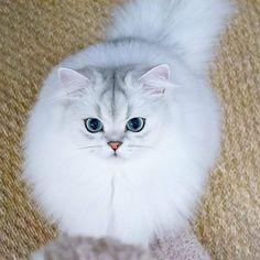 Kitty blog! from @littlelordreginald ❤❤❤