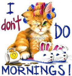 Morning Cat In Rollers Cat Sweatshirt Sizes Color Cute Good Morning Quotes, Good Morning Messages, Good Morning Good Night, Good Morning Images, Good Afternoon Quotes, Morning Cat, Morning Memes, Morning Greetings Quotes, Morning Person