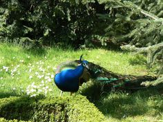 jardines campo del moro planes con ninos en madrid