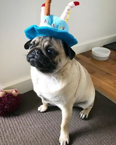 What more could she want than me in a cake hat  Organic Pet Boutique 7e7b448ace8