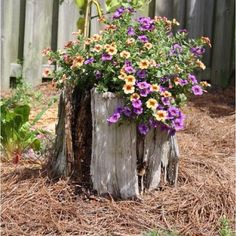 Makes me want an old tree stump in my yard!
