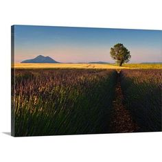 """Canvas On Demand Singularity by Izidor Gasperlin Photographic Print on Canvas Size: 24"""" H x 36"""" W x 1.25"""" D"""