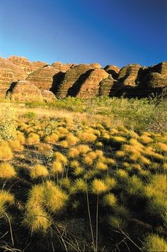The Bungle Bungle range in the Kimberley, Western Australia Western Australia, Australia Travel, Tasmania, Brisbane, Melbourne, Places To See, Landscape Photography, Beautiful Places, National Parks