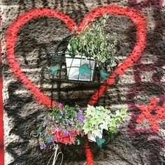 urban kraut's #GreenFavs  #💚kraut seen @ Grünberger Straße, #Berlin 🐝🌴🍂🌺🌻🌿 #urbangardening #urbangarden #urban #urbankraut #citykraut #gardening #coolgardening #gardening #urbanfarming #cityfarming