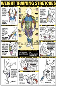 Workout Stretches Poster | by Bruce Algra