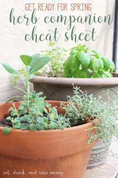 Get ready for spring with an herb companion cheat sheet to find out which herbs grow well together in container gardens #LoveYourLawn #CollectiveBias AD