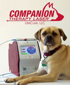 So excited to now be offering Laser Therapy!  http://www.litecure.com/companion/