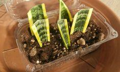 Talea, come si fa ad avere tante piante senza spendere un euro! – LEITV