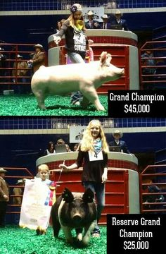 Fort Worth Stock Show Fort Worth Stock Show, Show Cattle, Showing Livestock, Ffa, How To Show Love, Show Horses, Congratulations, Pigs, Agriculture